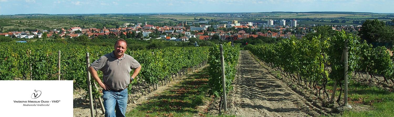 vino miroslav dudo vinohrady