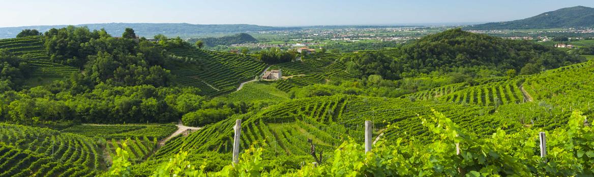 La Tordera vinarstvo vinice