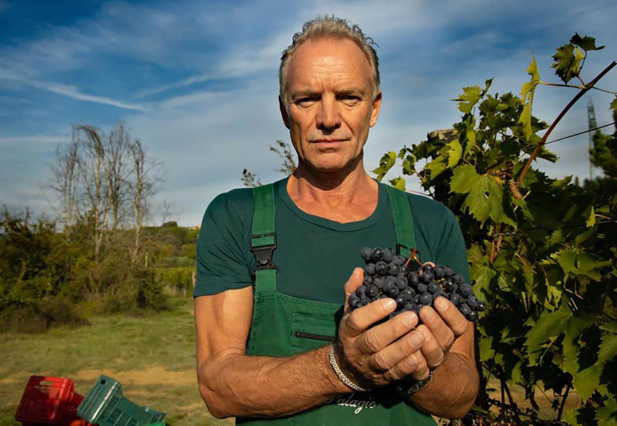 Sting winery il palagio