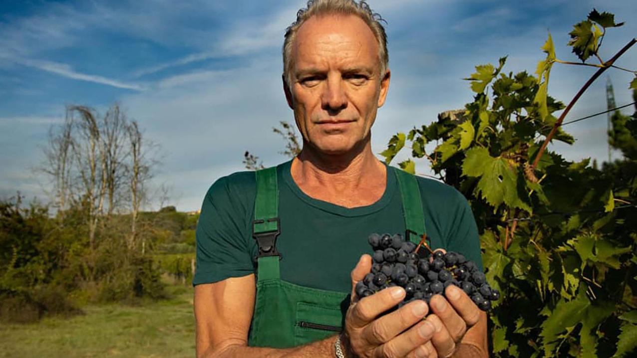 sting il palagio toskansko vino